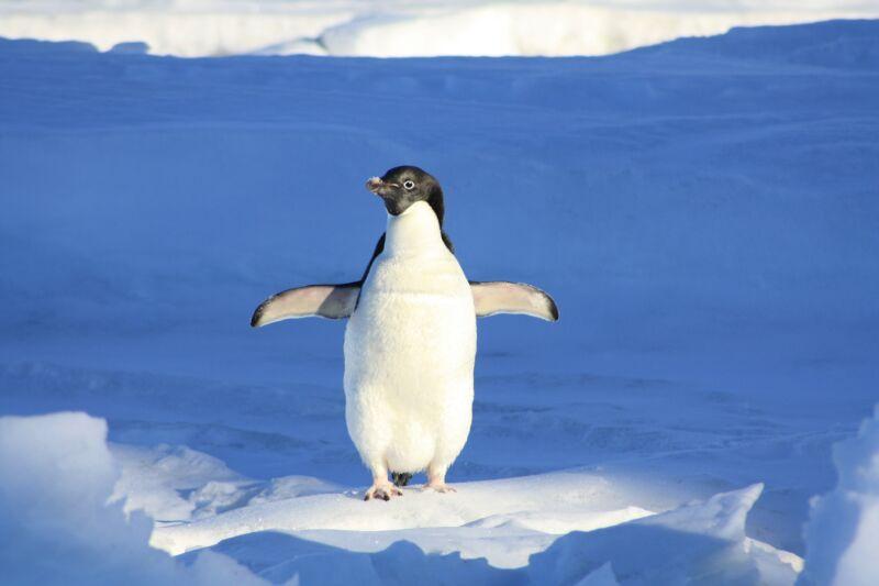 Сказка про пингвина