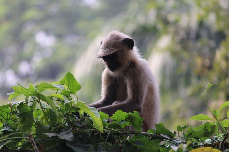 Сказка про обезьянку