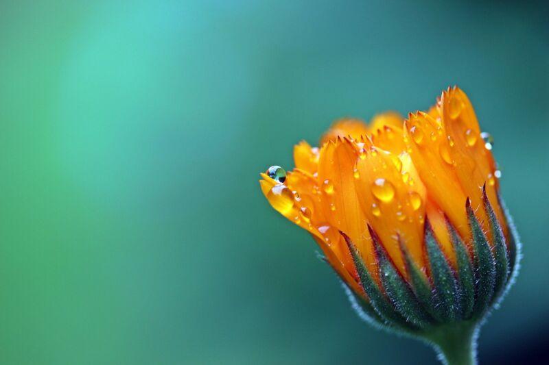 Сказка про цветочек