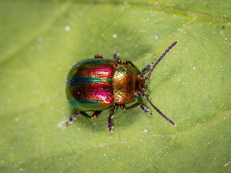 Сказка про жука