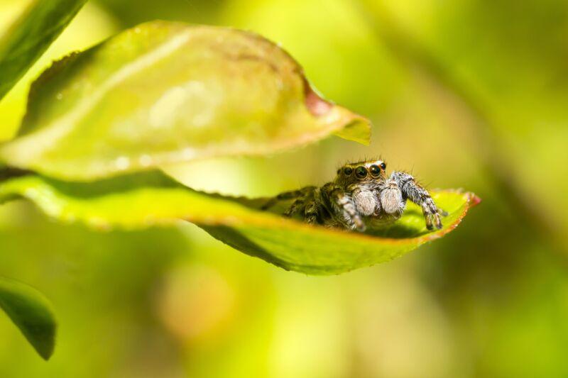 Сказка про насекомых