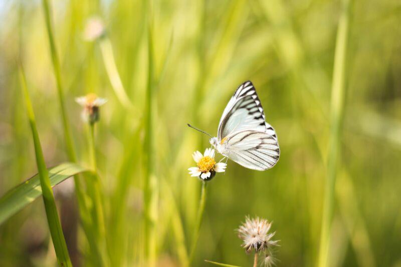 Сказка про бабочку